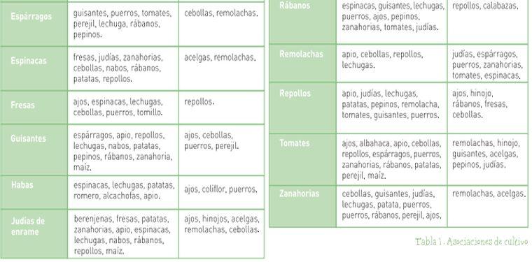 Asociaci n de cultivos diario de siembra asociaci n for Asociacion de hortalizas
