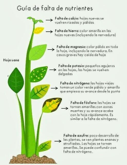 Taller de tratamientos caseros y naturales para cuidar for Como cuidar las plantas