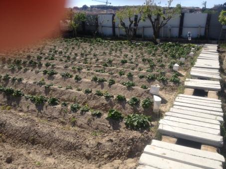 patatas 13-04-14
