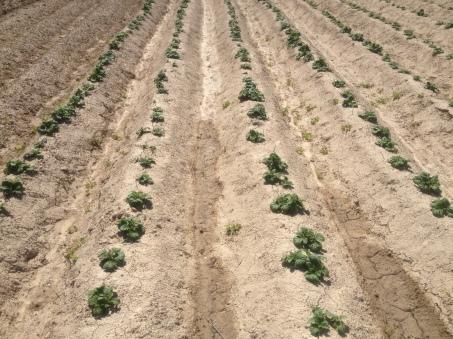 Patatas 9-04-2014