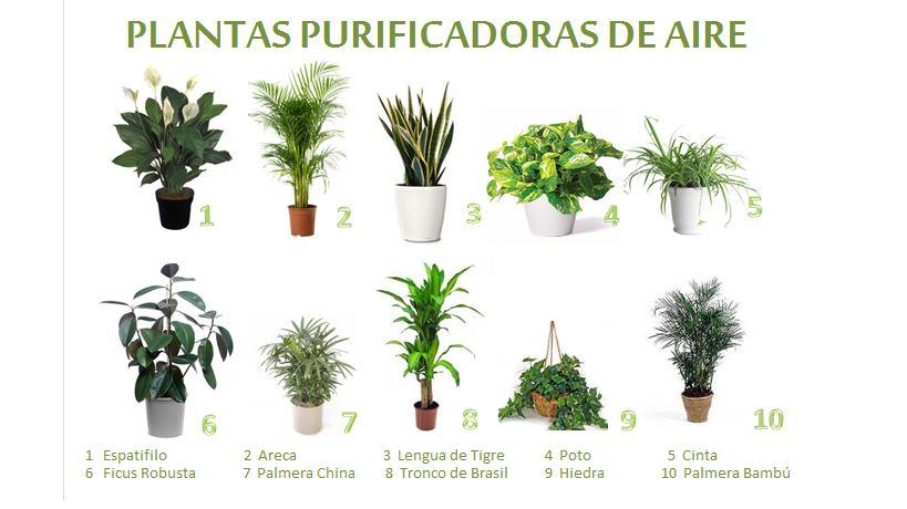 10 plantas que purifican el aire (1/2)