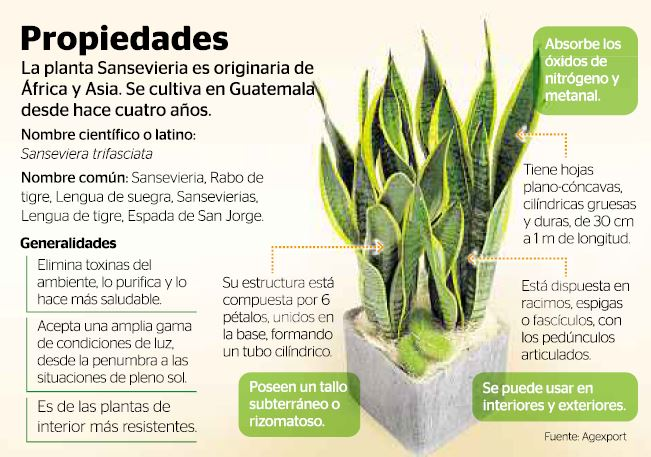 10 plantas que purifican el aire (2/2)