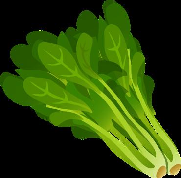 green-576756_1280